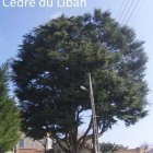 arbres remarquables0014