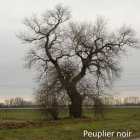 arbres remarquables0019